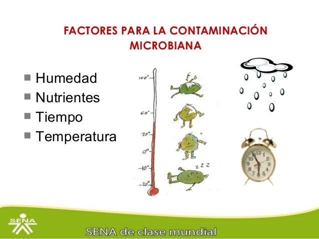 Los microorganismos clasificaci n y fuente de contaminaci n - Aparato para la humedad ...
