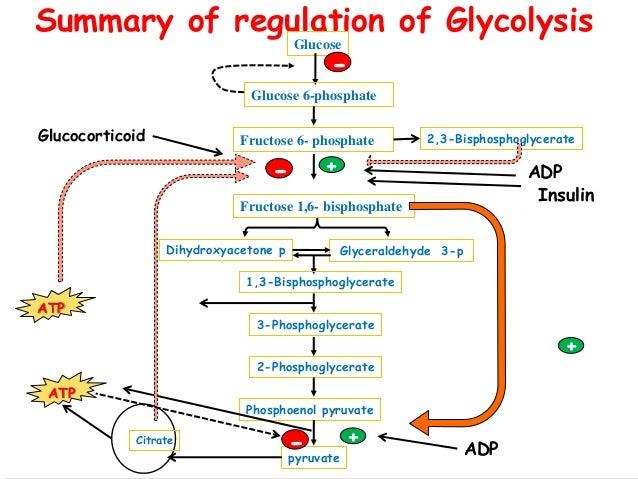 Fructose 6 Phosphate Glycolysis 6-phosphate Fructose 6-