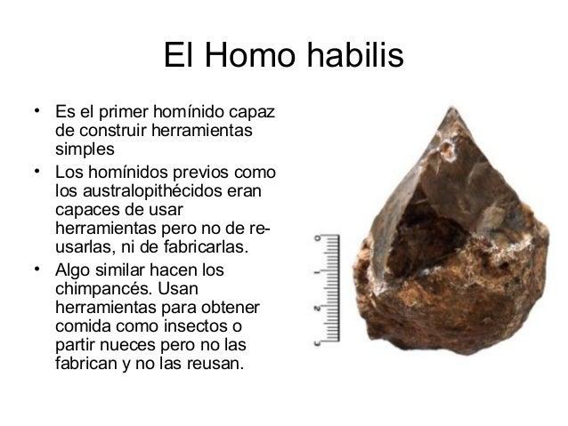 Herramientas del Homo Habilis