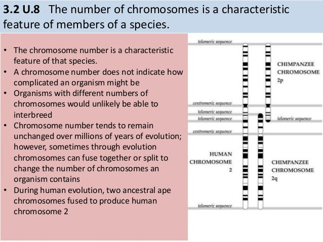 Worksheets Number Of Chromosomes Worksheet number of chromosomes worksheet mysticfudge irade co