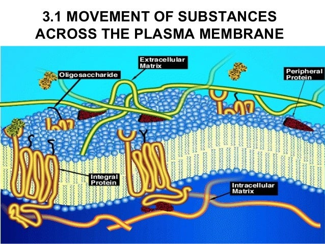 3.1 MOVEMENT OF SUBSTANCESACROSS THE PLASMA MEMBRANE