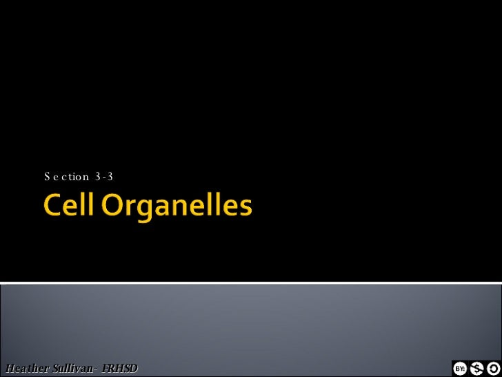 3 3 Cell Organelles Ppt