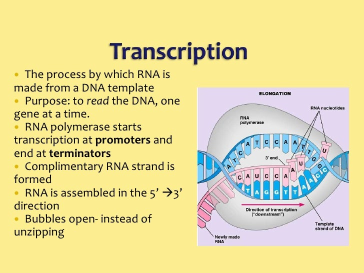 3 5 7 3 Dna Transcription