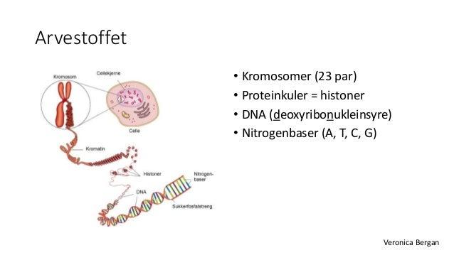 s genetiske sykdommer liste
