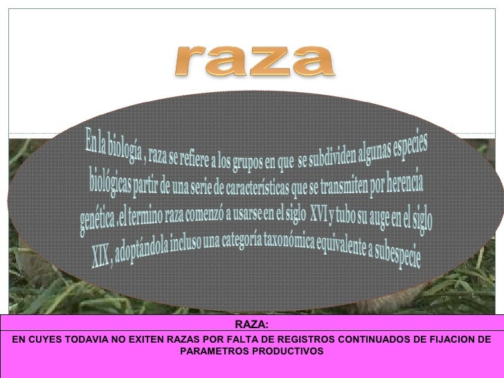 RAZA:EN CUYES TODAVIA NO EXITEN RAZAS POR FALTA DE REGISTROS morfológicas y productivas DE    Grupo de animales de la mism...
