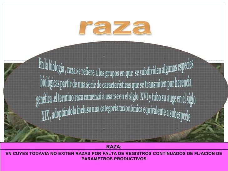 CLASIFICACION DE CUYES:RAZAS Y LINEAS GENETICAS www.peru-cuy.com