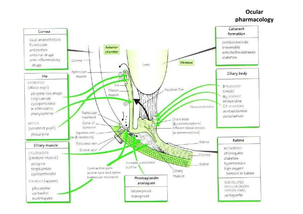Prestalia Side Effects in Detail - Drugs.com