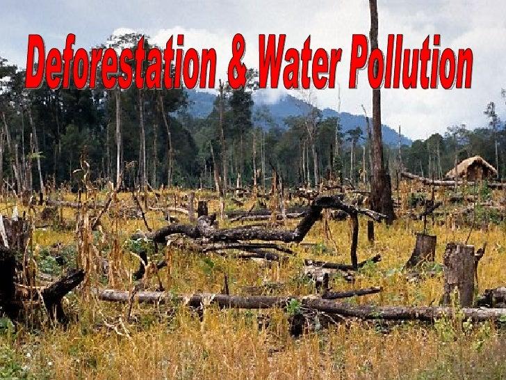 Deforestation & Water Pollution