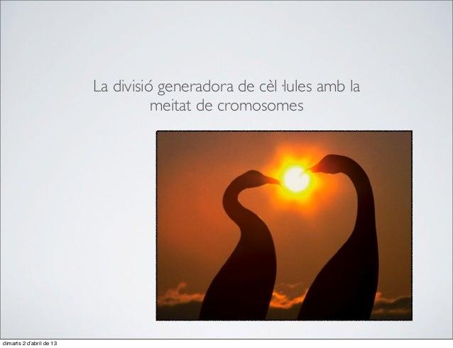 81. La divisió generadora de cèl·lules amb la meitat de cromosomes