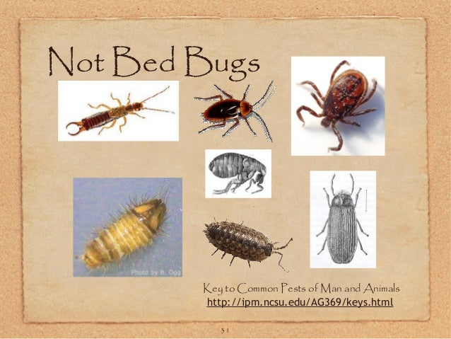 Bugs Found In Bed But Not Bed Bugs