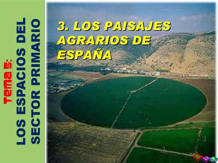 3   Paisajes Agrarios De EspañA