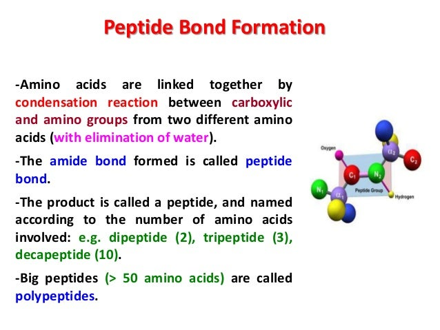 termpeptides  amino acids linked by peptide   Quizlet
