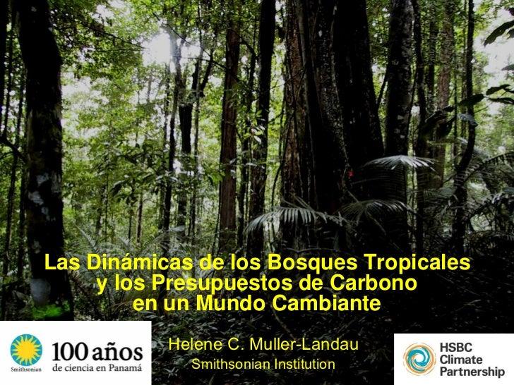 Las Dinámicas de los Bosques Tropicales     y los Presupuestos de Carbono         en un Mundo Cambiante           Helene C...