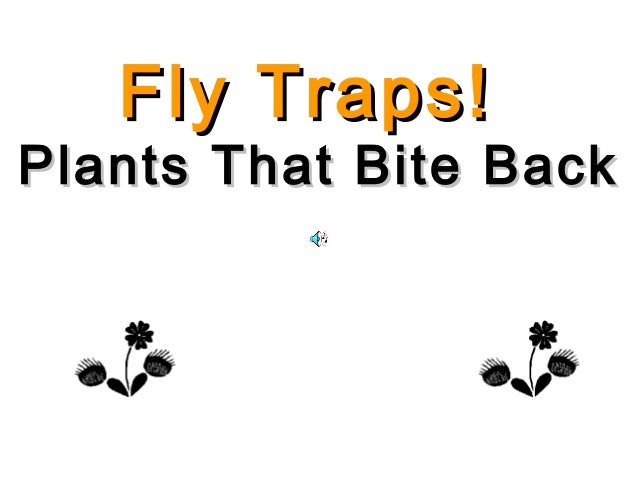 Fly Traps!Plants That Bite Back