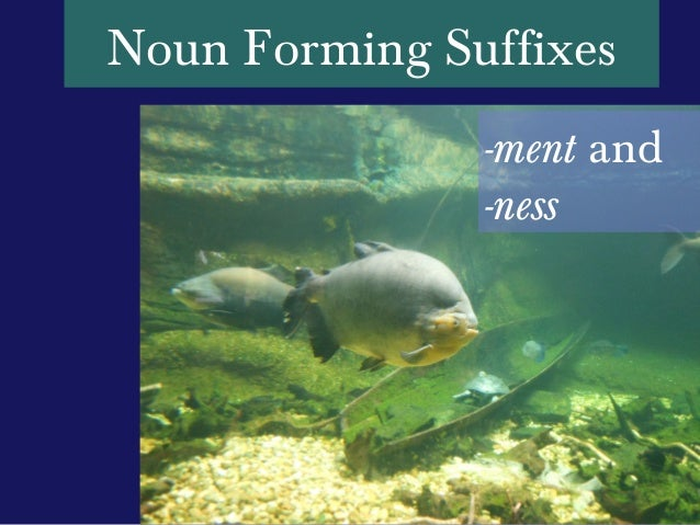 Noun Forming Suffixes               -ment and               -ness