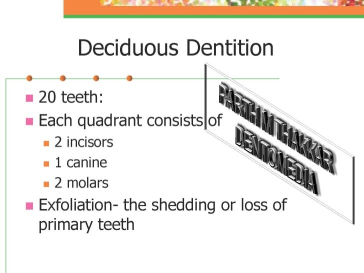 deciduous-dentition-pedo