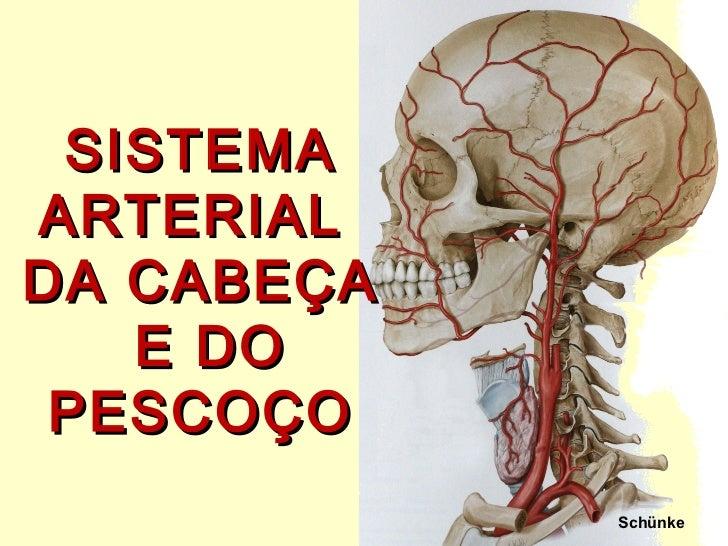 Schünke SISTEMA ARTERIAL  DA CABEÇA  E DO PESCOÇO