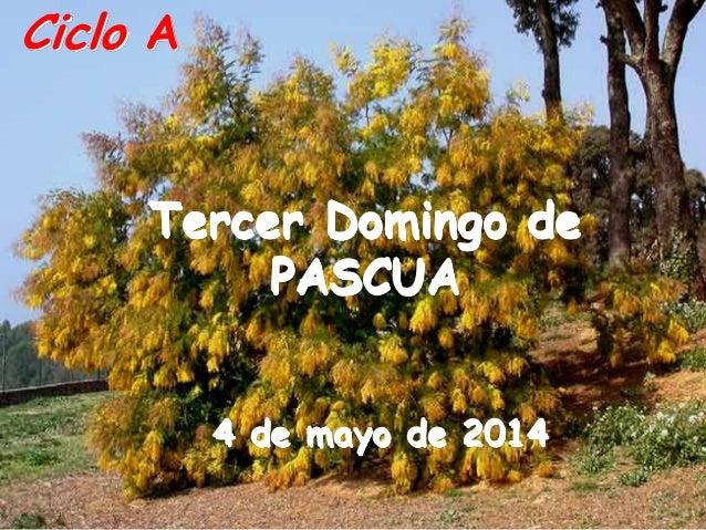 Ciclo A Tercer Domingo de PASCUA 4 de mayo de 2014
