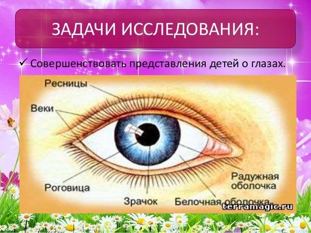 обычный человеческий глаз