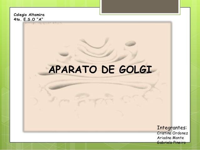"""APARATO DE GOLGI Colegio Altamira 4to. E.S.O """"A"""" Integrantes: Cristina Ordonez Ariadna Monte Gabriela Pineiro"""