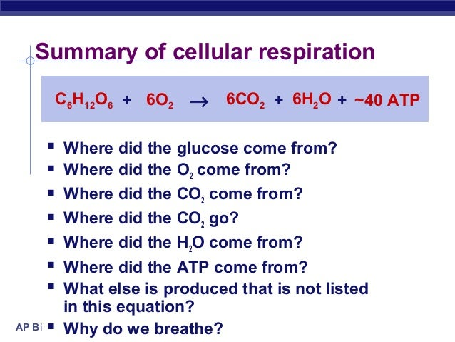 Holt biology worksheet answers photosynthesis and cellular respiration