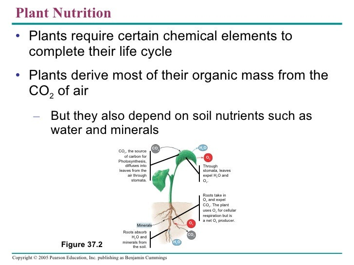 37 plantnutrition text