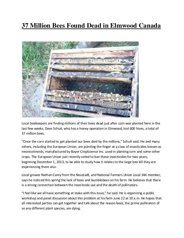 37 Million Bees Found Dead in Elmwood Canada Local beekeepers are finding millions of their bees dead just after corn was ...