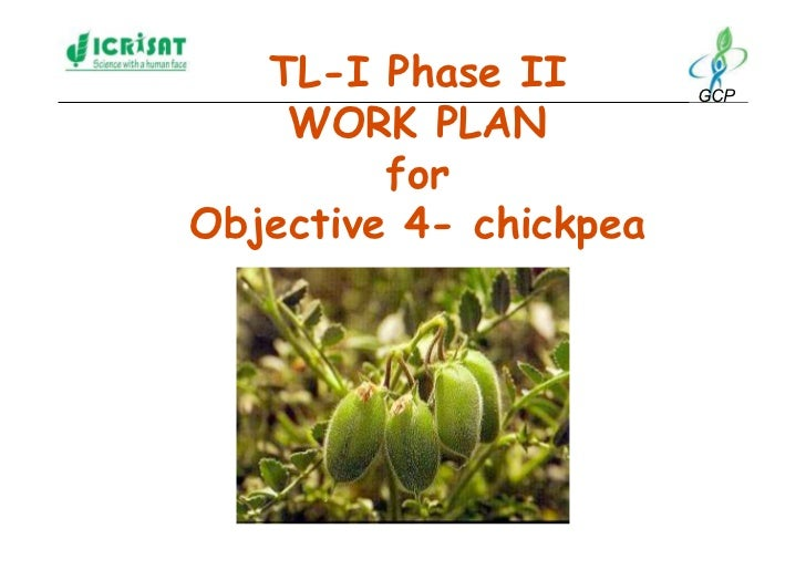 TL-I Phase II        GCP      WORK PLAN          for Objective 4- chickpea