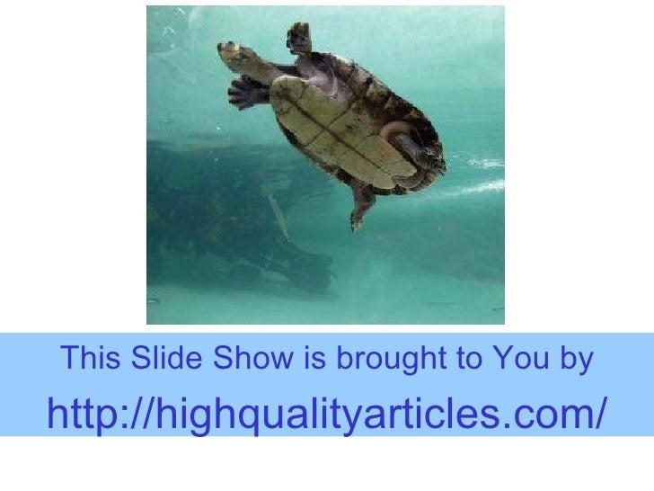 Setting Up A Turtle Aquarium
