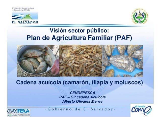 Visión sector público: Plan de Agricultura Familiar (PAF) CENDEPESCA PAF – CP cadena Acuícola Alberto Olivares Menay Caden...