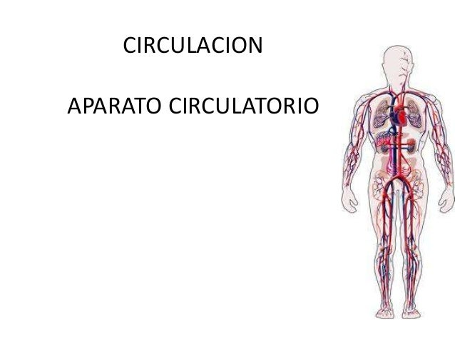 CIRCULACIONAPARATO CIRCULATORIO
