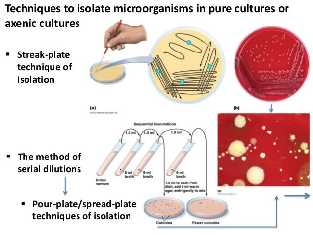 aseptic techniques and pure culture isolation of bacteria lab report Microbiology biol 275 dr eby bassiri ebassiri@sasupennedu 1 pure culture techniques i objectives • to demonstrate good aseptic technique in culture transfer or inoculation and in.