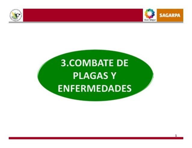 3 combate de plagas y enfermedades