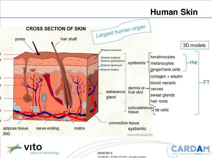 Planes of the Human Body Definition Anatomy amp Diagram