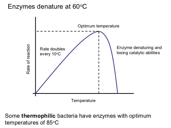 biology enzyme and temperature prac An enzyme) is determined by interactions between its amino acids and the surrounding environment primary structure is the protein's unique sequence of amino acids.