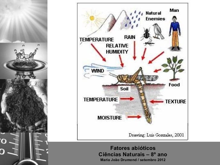 Fatores abióticosCiências Naturais – 8º anoMaria João Drumond / setembro 2012