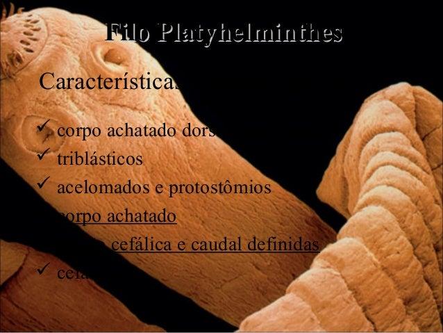 Filo Platyhelminthes Características gerais do grupo  corpo achatado dorsiventralmente  triblásticos  acelomados e prot...