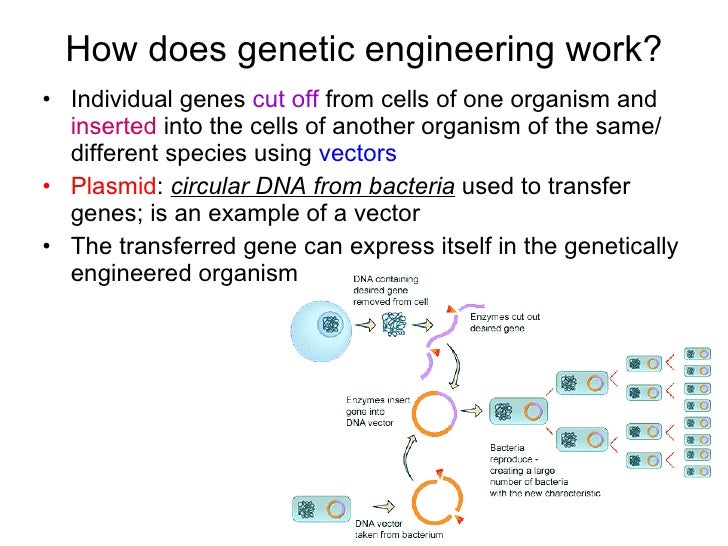 Chapter 20 Molecular Genetics Lesson 3 - Genetic Engineering