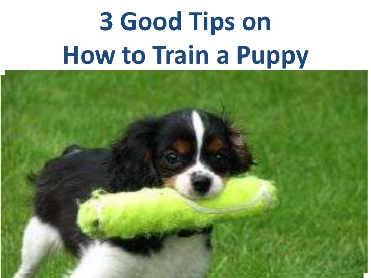 3 Good Tips on How to Train a Puppy