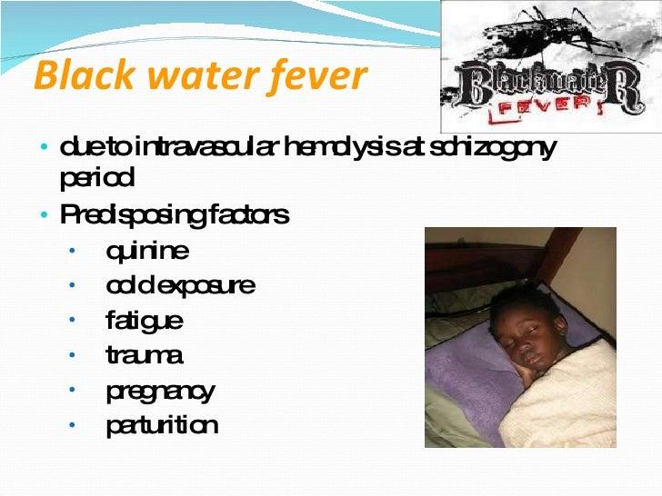 Лихорадка черной воды