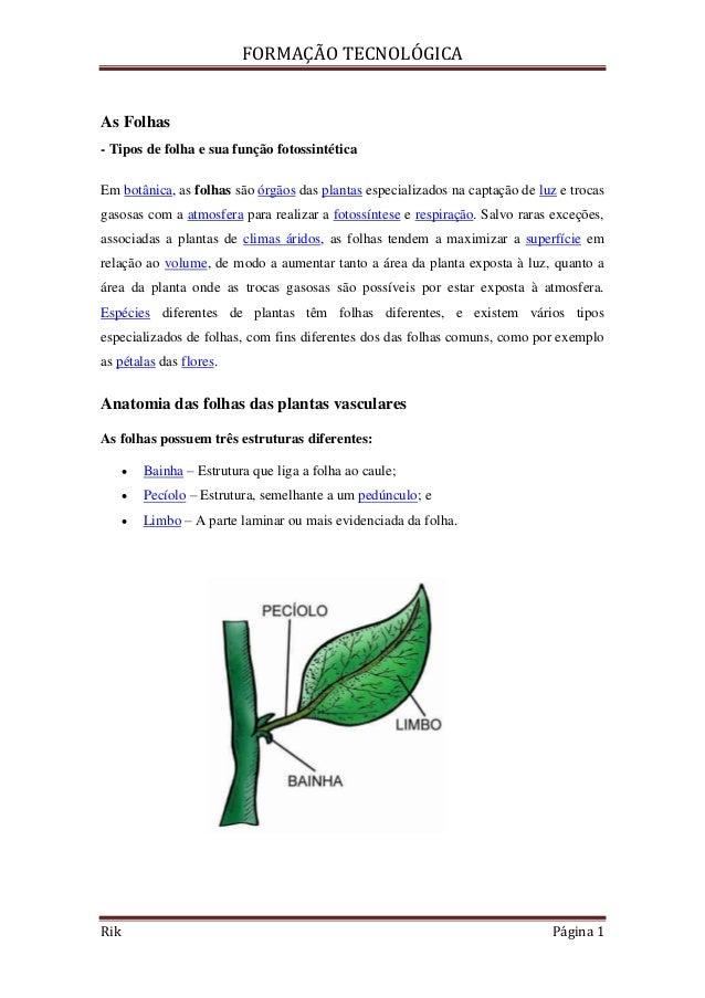 FORMAÇÃO TECNOLÓGICARik Página 1As Folhas- Tipos de folha e sua função fotossintéticaEm botânica, as folhas são órgãos das...