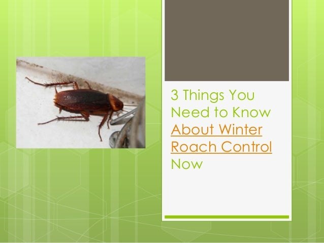 3 Things You Need to Know About Winter Roach Control Now