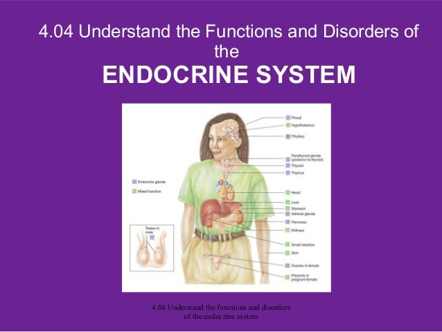 4.04 Understand the Functions and Disorders oftheENDOCRINE SYSTEM4.04 Understand the functions and disordersof the endocri...