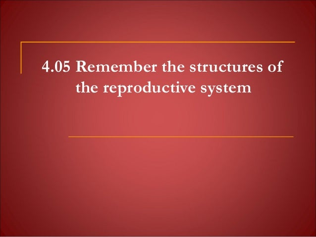 4.05 Remember the structures ofthe reproductive system