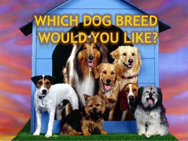 Before you startlearning about thepersonalities and traitsof the common dogbreeds in our dogbreed profile, here aresome po...