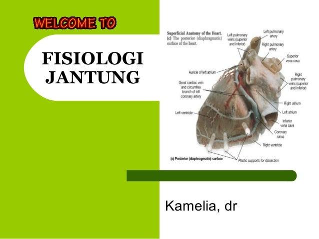 FISIOLOGI JANTUNG Kamelia, dr