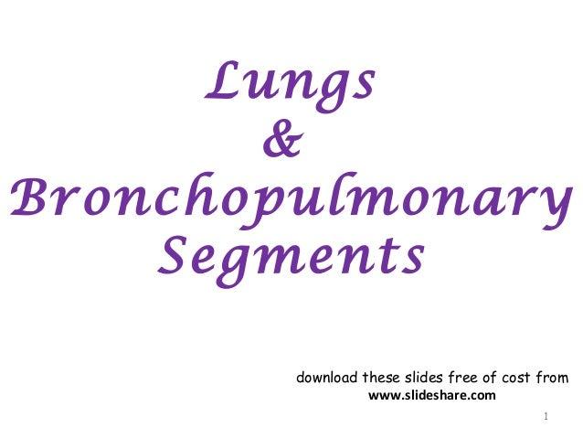 lungs bp segments