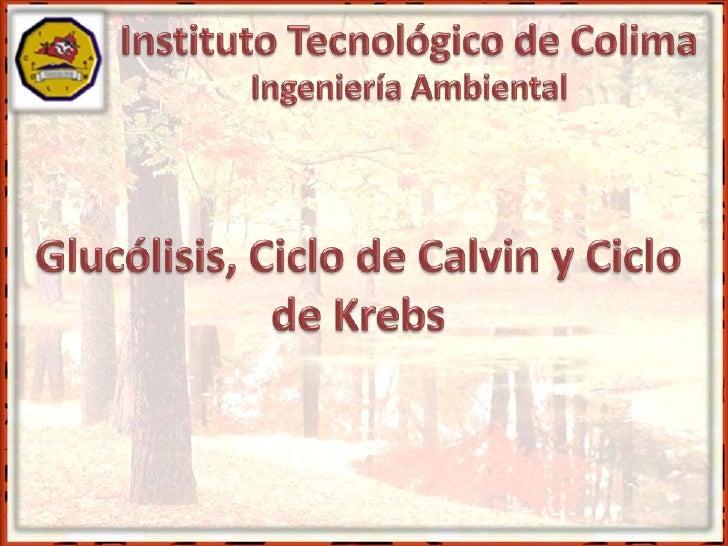 Glucólisis, ciclos de Calvin y Krebs