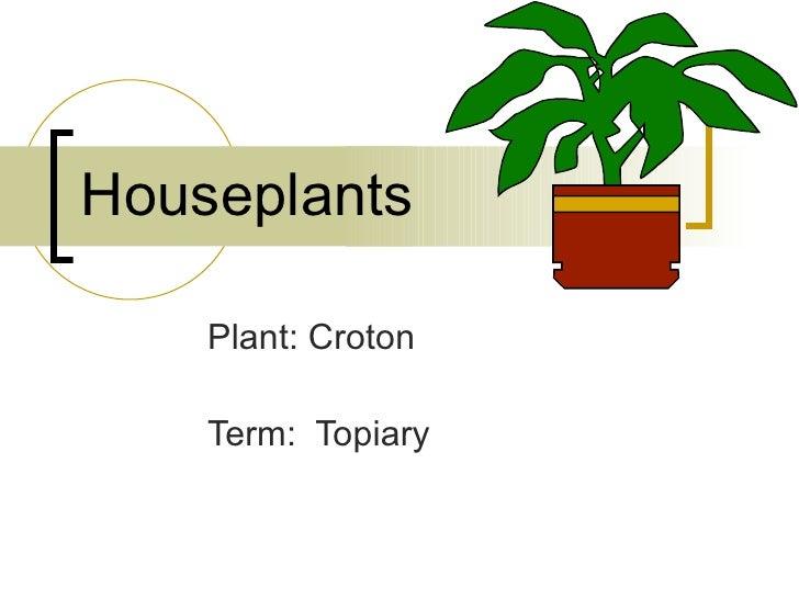 Houseplants Plant: Croton Term:  Topiary