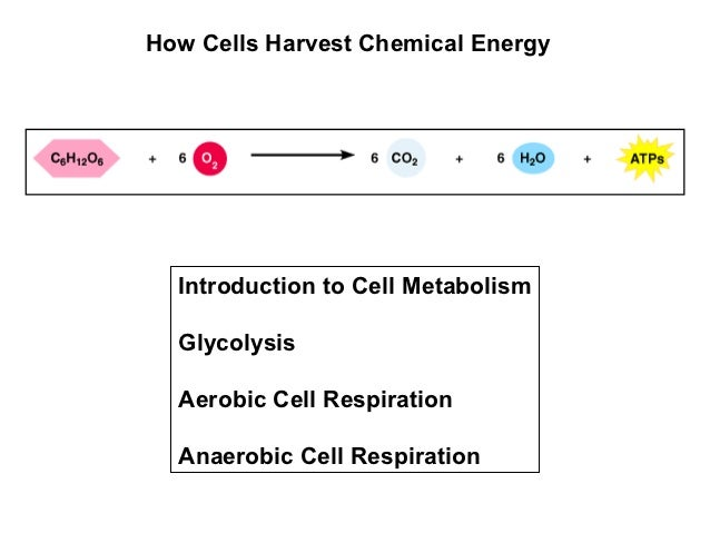 How Cells Harvest Chemical Energy  Introduction to Cell Metabolism  Glycolysis  Aerobic Cell Respiration  Anaerobic Cell R...